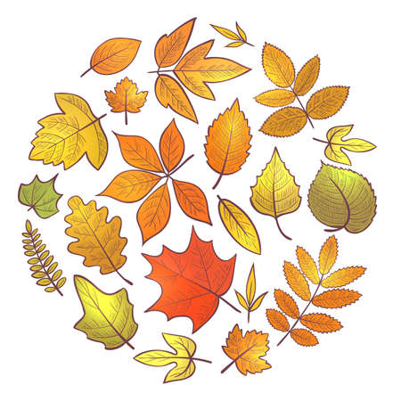 Background with autumn leaves, hello autumn. Vector