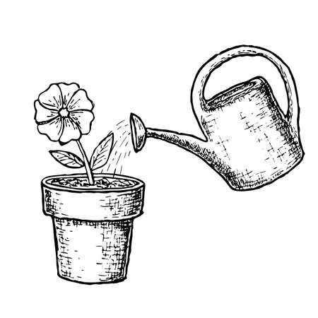 Potted flower and watering Ilustracja