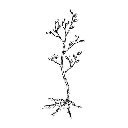 Seedling tree sketch Illustration