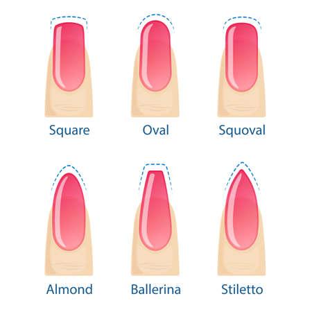 Nagel manicure, set nagels vormen - ovaal, vierkant, amandel, stiletto, ballerina squoval Vector