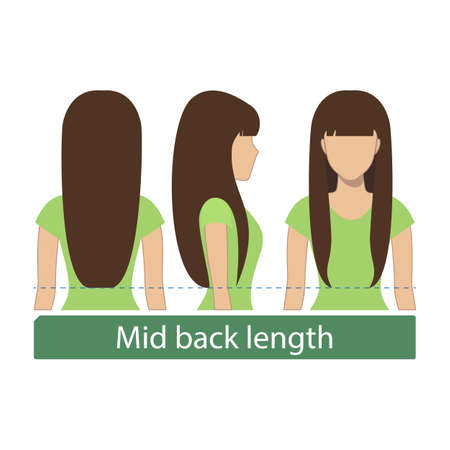 Hair length for haircuts and hairstyles - mid back length. Vector.