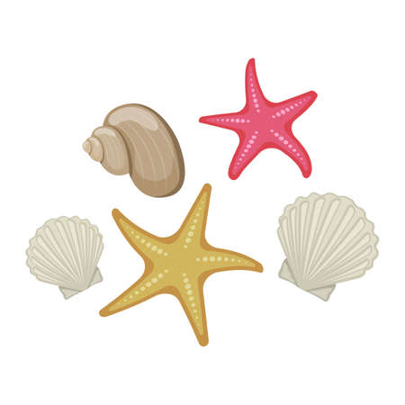Shells and starfish on white background, cartoon illustration.