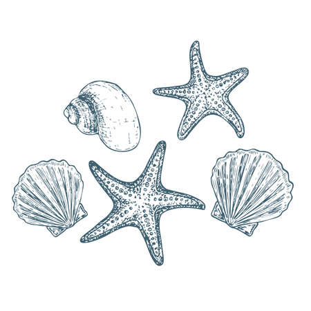 Shells and starfish on white background, cartoon illustration. Vector Illustration