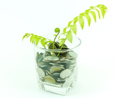 bank branch: Plant and a cup of Thai coins