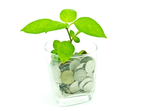 Plant and a cup of Thai coins  photo
