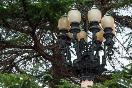 pinetree: Street lamp on the background of the pine-tree branches Stock Photo