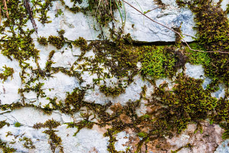 steep: Texture of steep rocky wall covered with moss front view