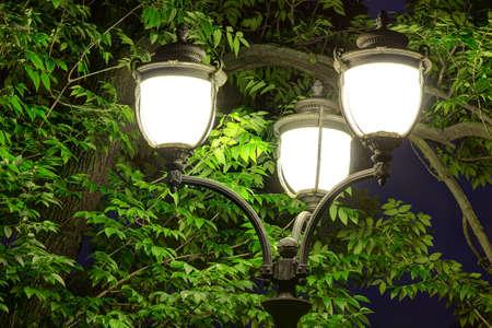Nachtstraatlantaarn op de achtergrond van boomgebladerte