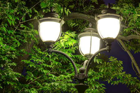Night street light on the background of tree foliage