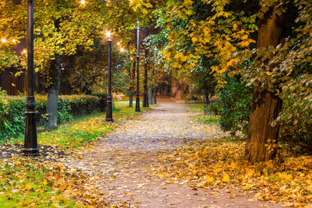 Night view of illuminated alley in the autumn park Stock Photo