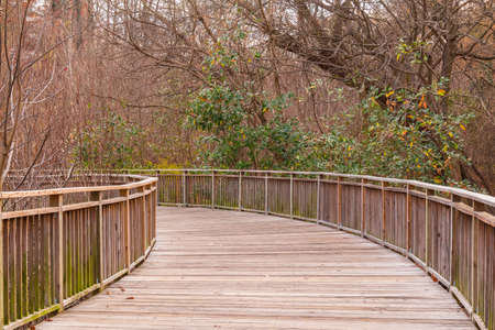 The Boardwalk and thicket of bare trees in the Piedmont Park in autumn day, Atlanta, USA Stock Photo