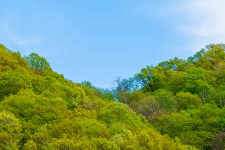 Blue cloudy sky over the mountainsides with thicket of trees in sunny summer day
