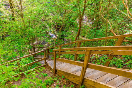 Wooden stairs and thicket in the park Berendeyevo Tsarstvo in sunny summer day, Sochi, Russia