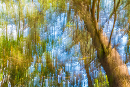 Abstract nature background of tree crown on the background of sky in motion blur Stock Photo