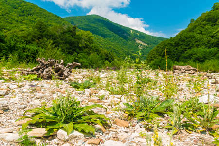 Landscape with rocky floor of ravine on the background of Tamyurdepe mountain in sunny summer day, Sochi, Russia