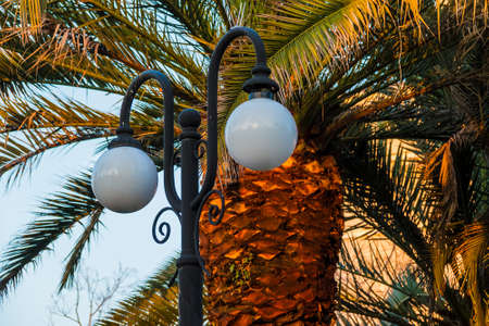 Streetlight on the background of palm closeup