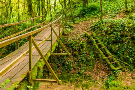 Mossy ladder and bridge in the boxwood grove of the ravine Chudo-Krasotka in summer day, Sochi, Russia