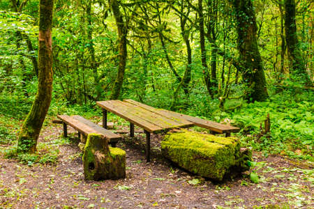Mossy table, benches and stumps in the boxwood grove of the ravine Chudo-Krasotka in summer day, Sochi, Russia