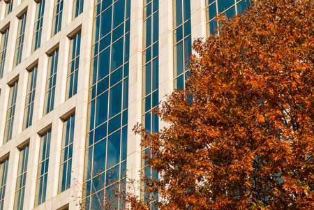 Bottom view of the skyscraper and branches of oak in sunny autumn day, Atlanta, USA Stock Photo