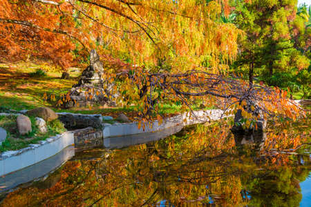 Japanese garden with pond in Arboretum in sunny autumn day, Sochi, Russia