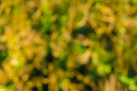 Background image of blurred thicket of box-trees with moss and ivies in sunny autumn day Banco de Imagens