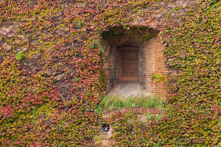 A window on the facade of the Montjuic Castle overgrown with ivies in autumn day front view, Barcelona, Spain