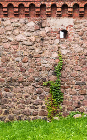 The stone fortress wall of the Vyborg Castle with loophole and ivy, Vyborg, Leningrad Oblast, Russia Banco de Imagens