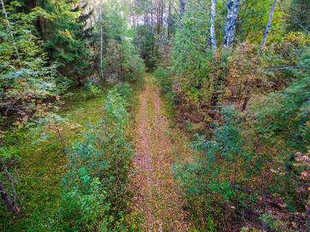 Drone view of the country road in the forest in autumn day, Toksovo, Leningrad Oblast, Russia
