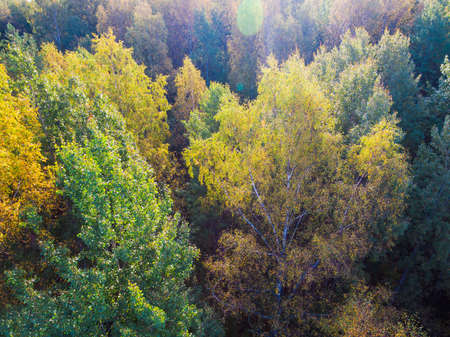 Drone view of the mixed forest in sunny autumn day, Toksovo, Leningrad Oblast, Russia Banco de Imagens