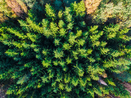 Top-down drone view of the mixed forest in sunny autumn day, Toksovo, Leningrad Oblast, Russia Banco de Imagens