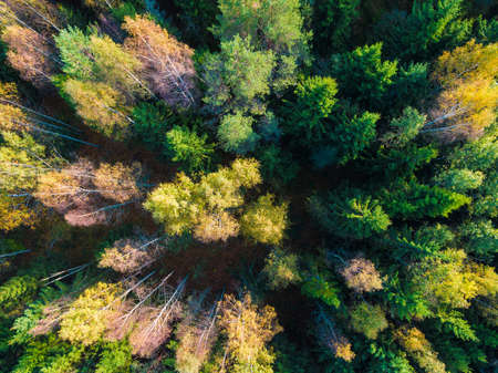 Top-down drone view of the mixed forest in sunny autumn day, Toksovo, Leningrad Oblast, Russia Standard-Bild