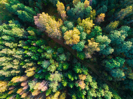 Top-down drone view of the country road in the forest in sunny autumn day, Toksovo, Leningrad Oblast, Russia