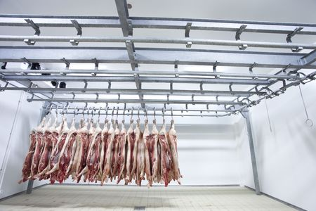 Butchered and processed pigs hanging in a slaughter house refrigerator