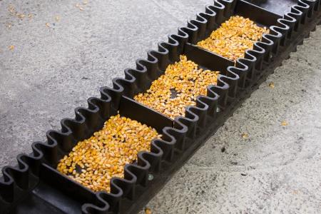 cinta transportadora: La producción automatizada comida concepto cinta transportadora con maíz
