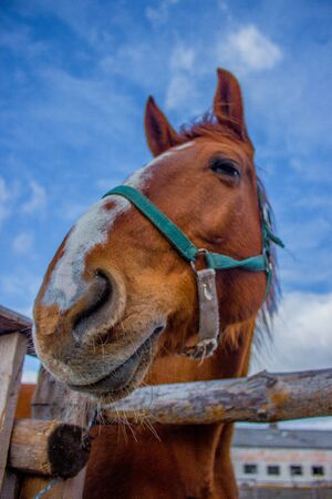 working animal: Horse smile on the portret background sky