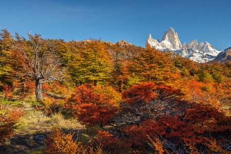 Stunningly beautiful autumn view from the tourist trail in the pearl of the Argentine Patagonia - Mount Fitz Roy in the National Park Los Glaciares National Park. Stock Photo