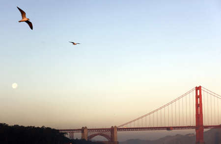 moon gate: Seagulls fly through the dusklight at Golden Gate Bridge in San Francisco, California