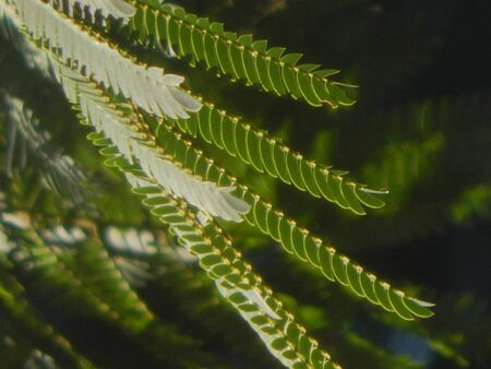 ferns: Nature Ferns