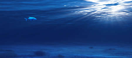 a fish in the ocean