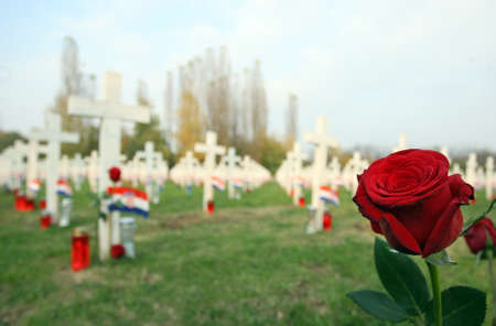 Military cemetery with lots of candles, rose in first plan Stock Photo