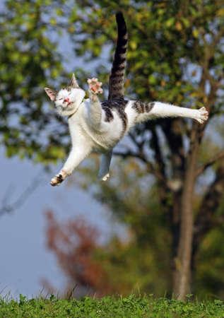 Cat jumping in grass field