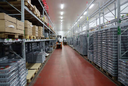 Warehouse with meat products in big fridge, driving forklifts