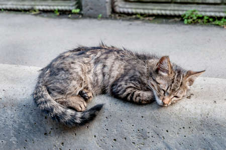 Street homeless cat (kitten). Animals in the city. Lost and homeless cats.