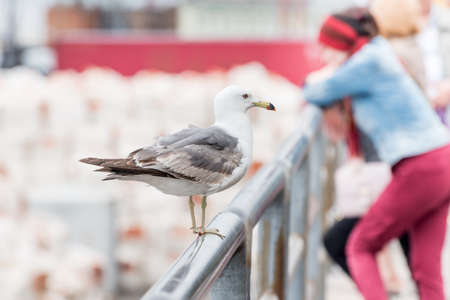 Seagull sits on metal fence on the seashore. An unrecognizable tourist on background.