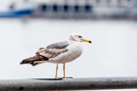 Seagull on the seashore. Banco de Imagens