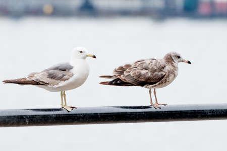 Seagulls on the seashore. Banco de Imagens