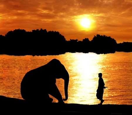 elephant training in thailand during sunset silhouetted photo