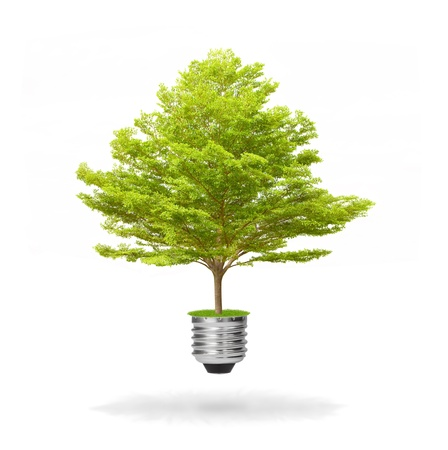 green energy eco concept, tree growing out of bulb Stock Photo