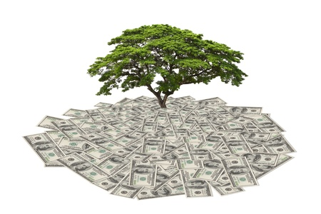 money to save tree in the future, big tree growing from heap of dollar bill photo
