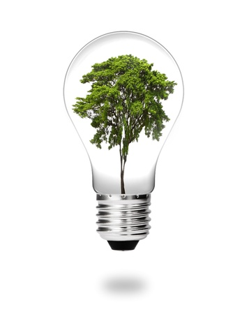 future green energy saving eco concept, big  tree growing in electric light bulb isolated on white photo